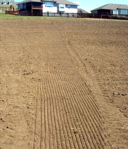 Seeding rows in kansas lawn